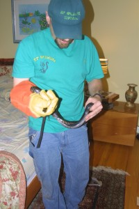 snake removal from bed room CT