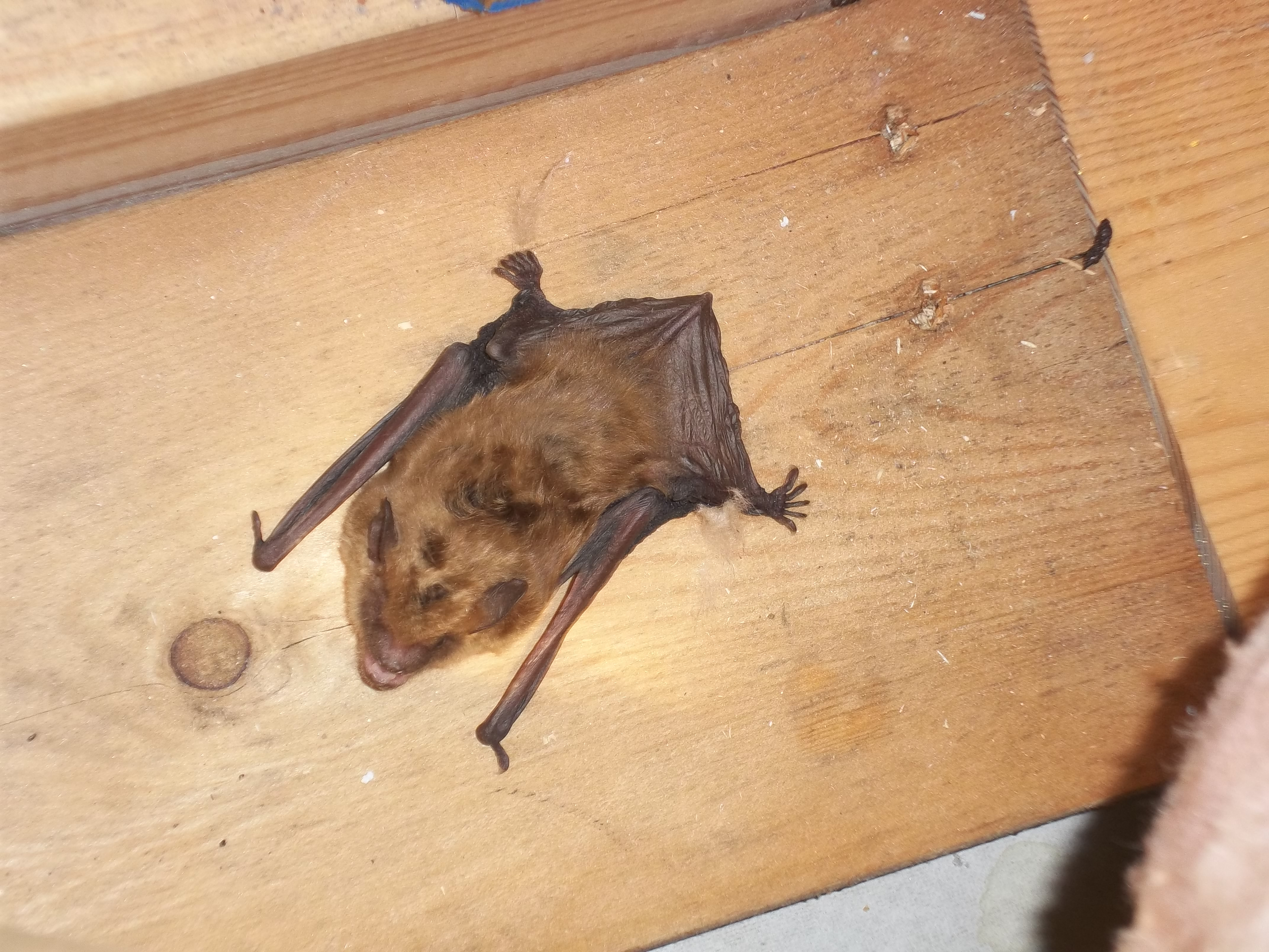How can you get rid of bats in winter?
