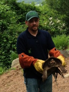 Snapping Turtle Removed from yard in CT